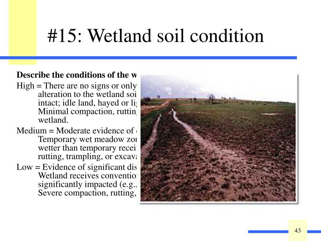 Describe the conditions of the wetland soils: