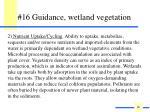 16 guidance wetland vegetation