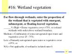16 wetland vegetation