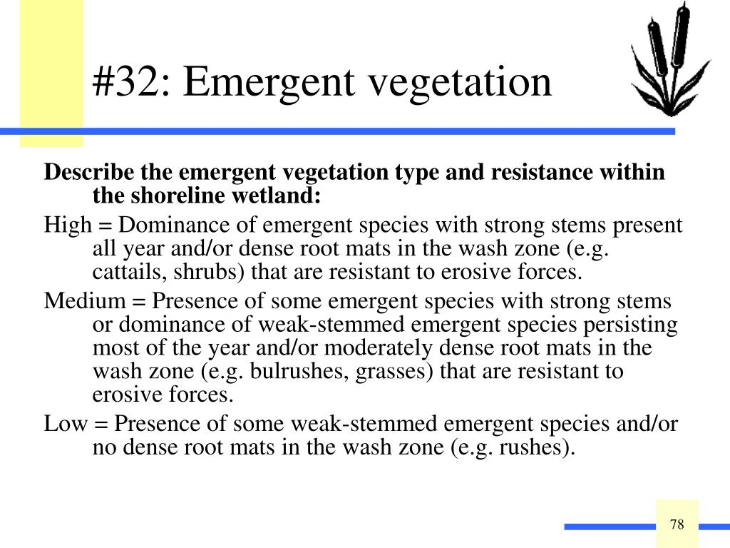 Describe the emergent vegetation type and resistance within the shoreline wetland: