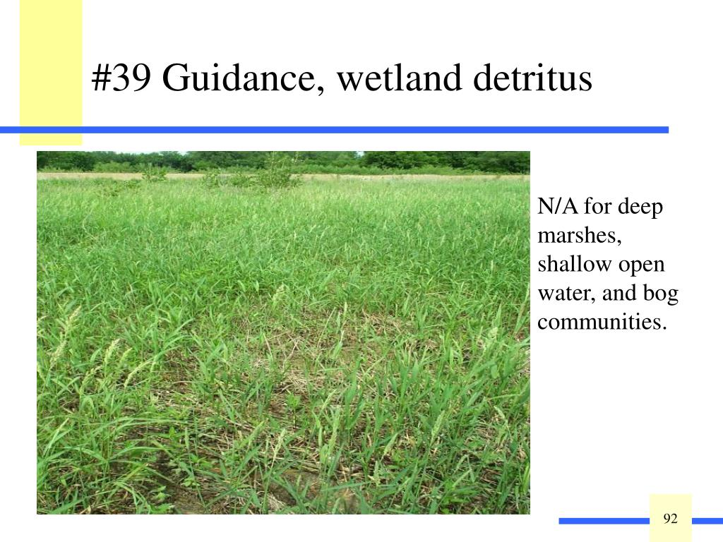 Detritus or vegetative litter in various stages of decomposition is a sign of a healthy wetland. Detrital biomass impacts nutrient cycling processes and disturbance regime and thereby influences plant assemblages. Detritus maintains thermal regulation of rhizomes and propagules, and is essential to nutrient cycling. The integrity of the system's vegetation components supplies the bulk of the faunal habitat requirements.