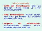 laktoz fermantasyonlar