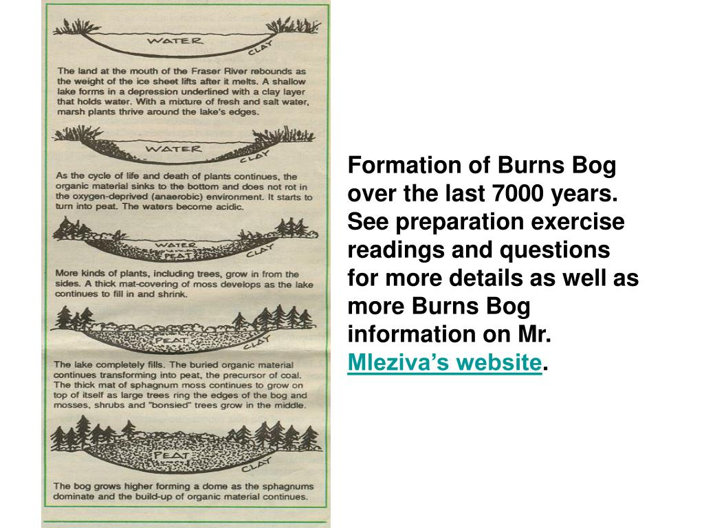 Formation of Burns Bog over the last 7000 years.  See preparation exercise readings and questions for more details as well as more Burns Bog information on Mr.