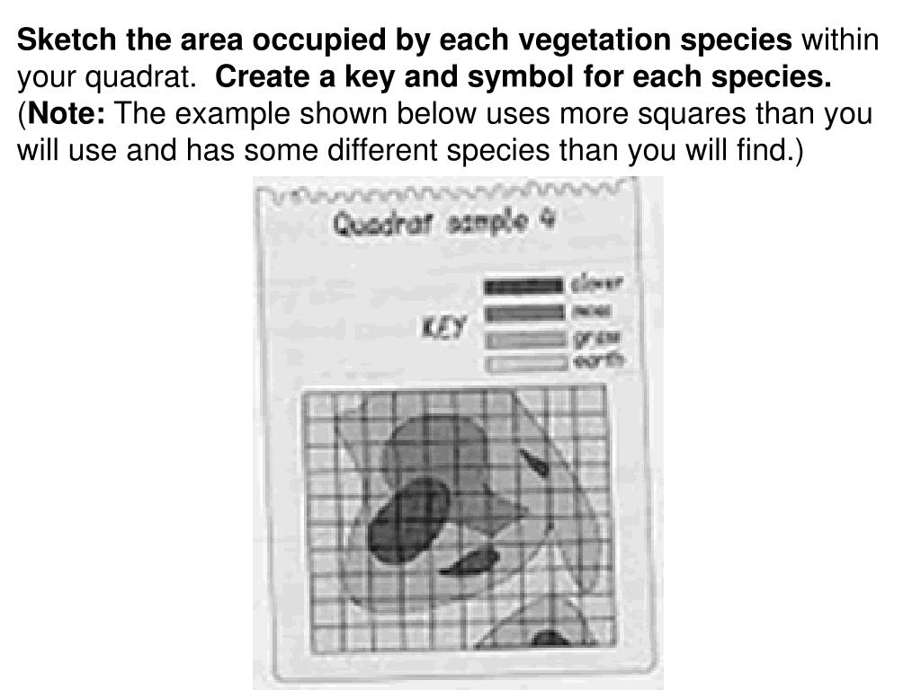 Sketch the area occupied by each vegetation species