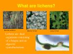 what are lichens