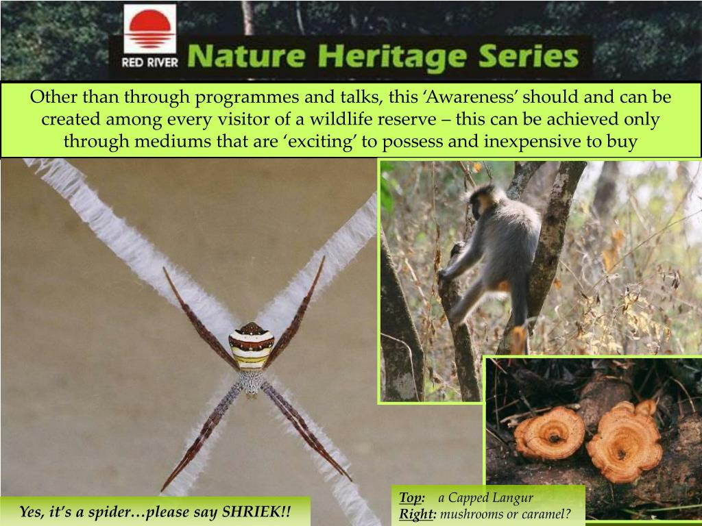 Other than through programmes and talks, this 'Awareness' should and can be created among every visitor of a wildlife reserve – this can be achieved only through mediums that are 'exciting' to possess and inexpensive to buy