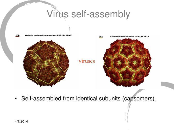 Virus self assembly