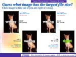 guess what image has the largest file size click image to find out if you are right or wrong