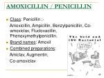 amoxicillin penicillin