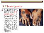 4 6 tumor genesis