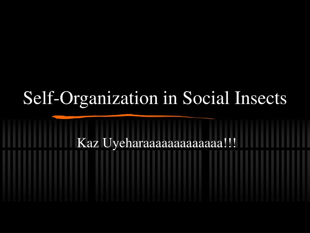self organization in social insects l.
