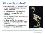 what really is a bird