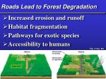 roads lead to forest degradation