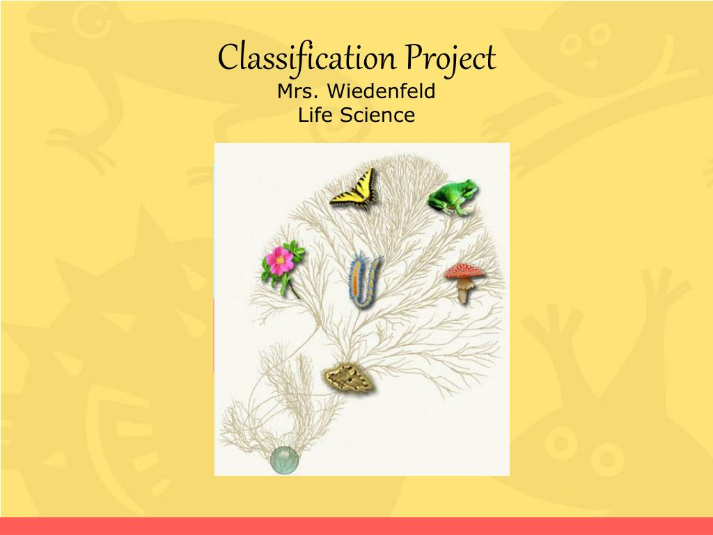 classification project mrs wiedenfeld life science l.