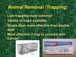 animal removal trapping