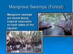 mangrove swamps forest