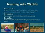 teaming with wildlife