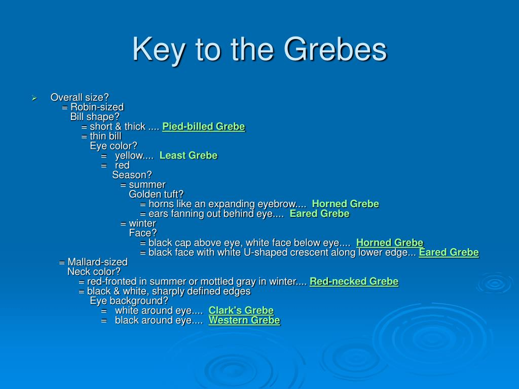 Key to the Grebes