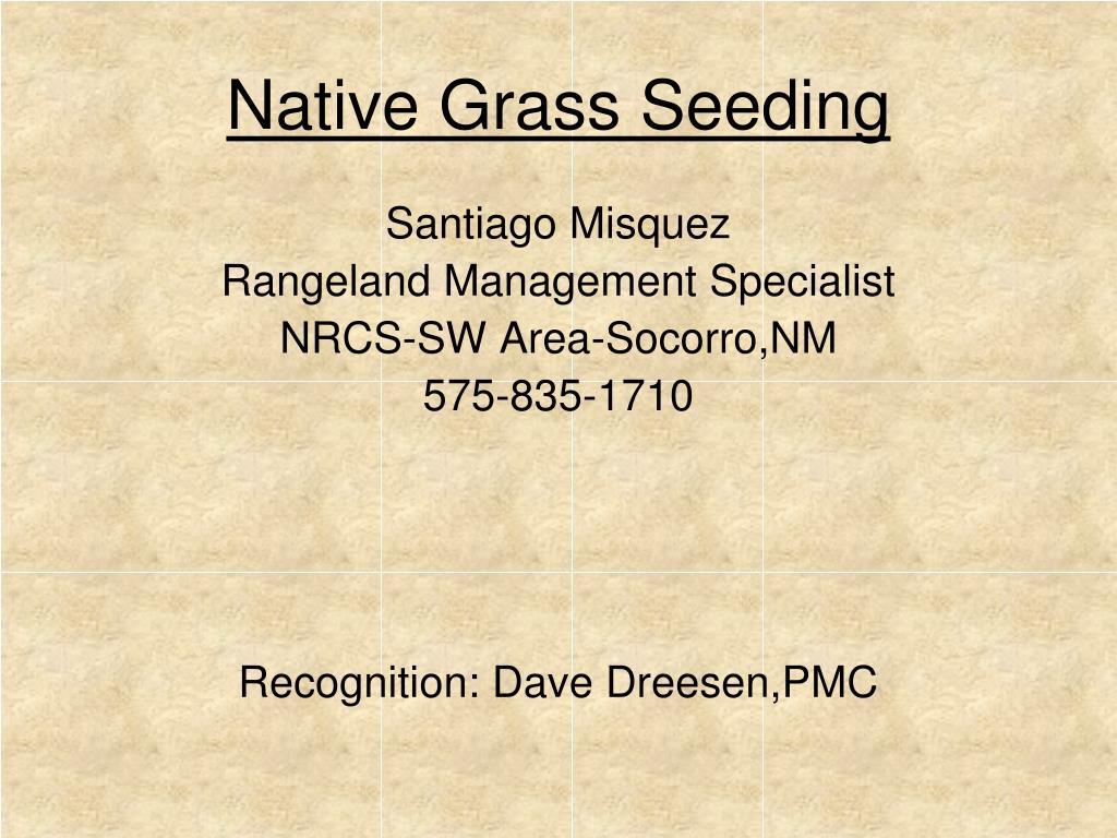 native grass seeding l.