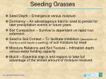 seeding grasses