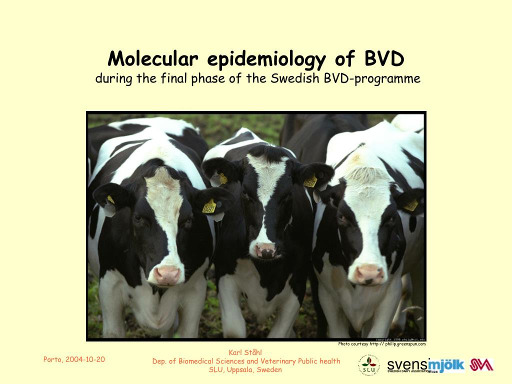 molecular epidemiology of bvd during the final phase of the swedish bvd programme l.