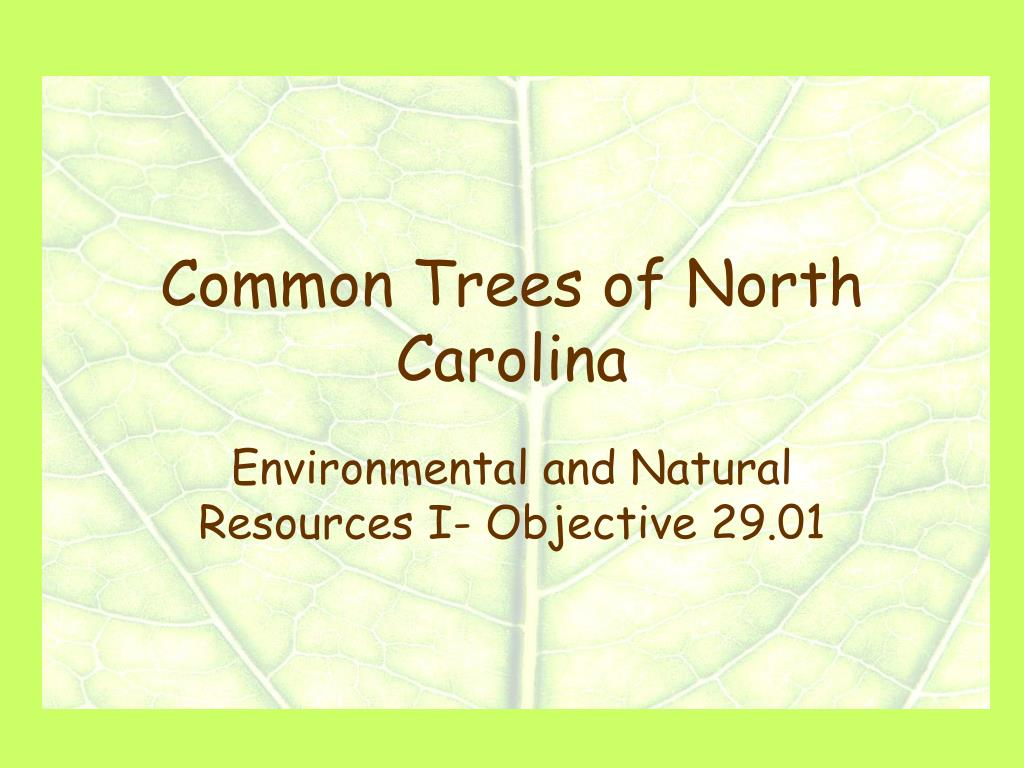 common trees of north carolina l.