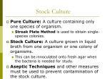 stock culture
