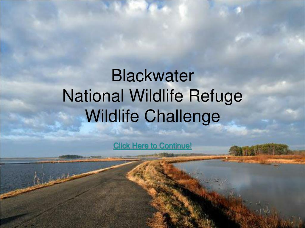 blackwater national wildlife refuge wildlife challenge l.