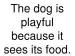 the dog is playful because it sees its food