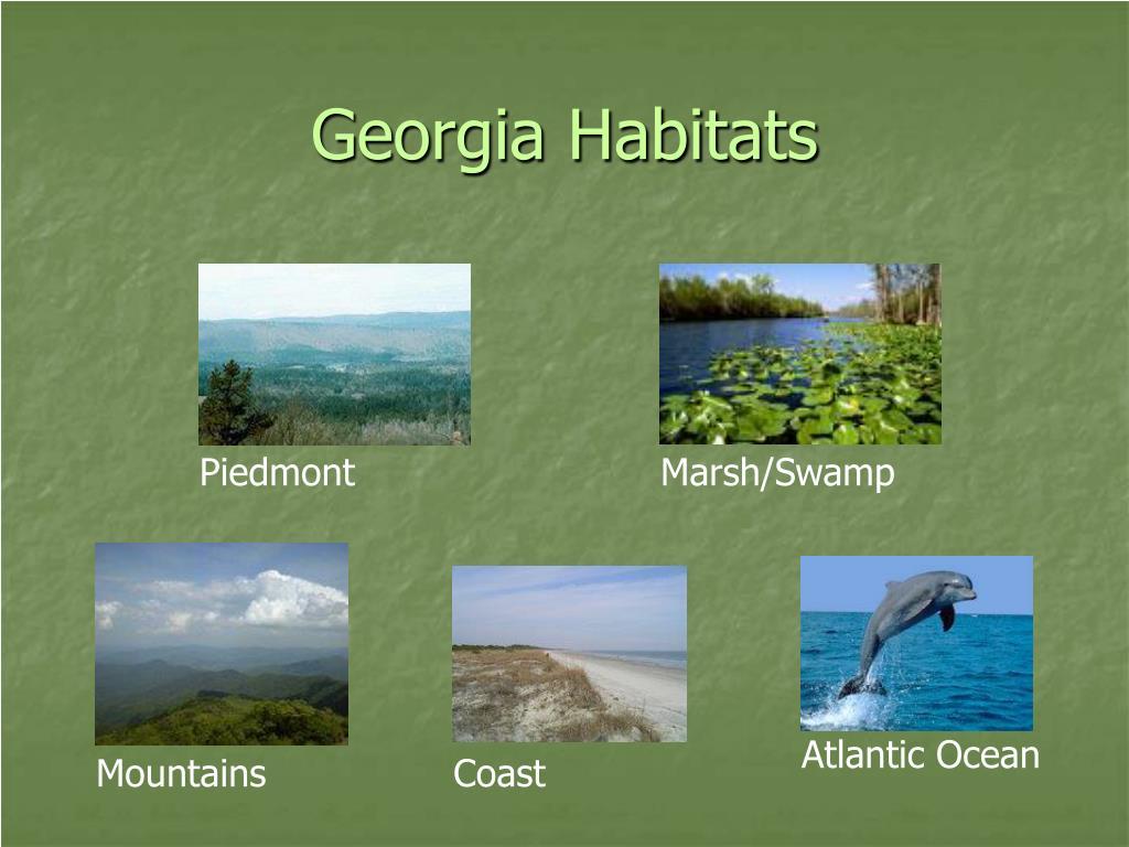 georgia habitats l.