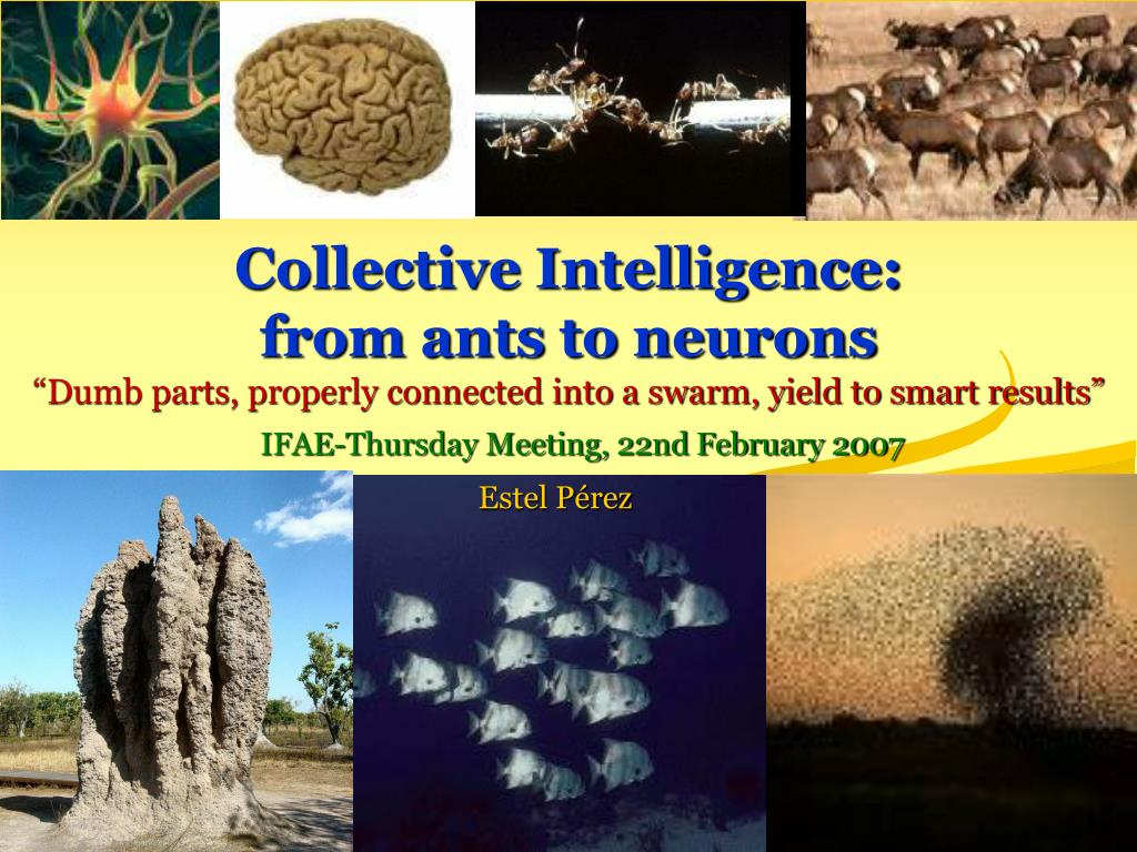 collective intelligence from ants to neurons l.