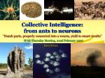 collective intelligence from ants to neurons