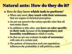 natural ants how do they do it