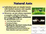 natural ants