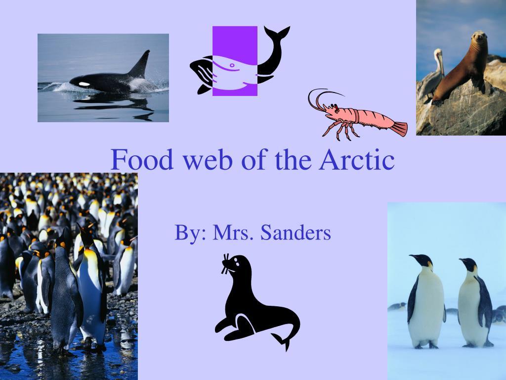 food web of the arctic l.