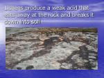 lichens produce a weak acid that eats away at the rock and breaks it down into soil