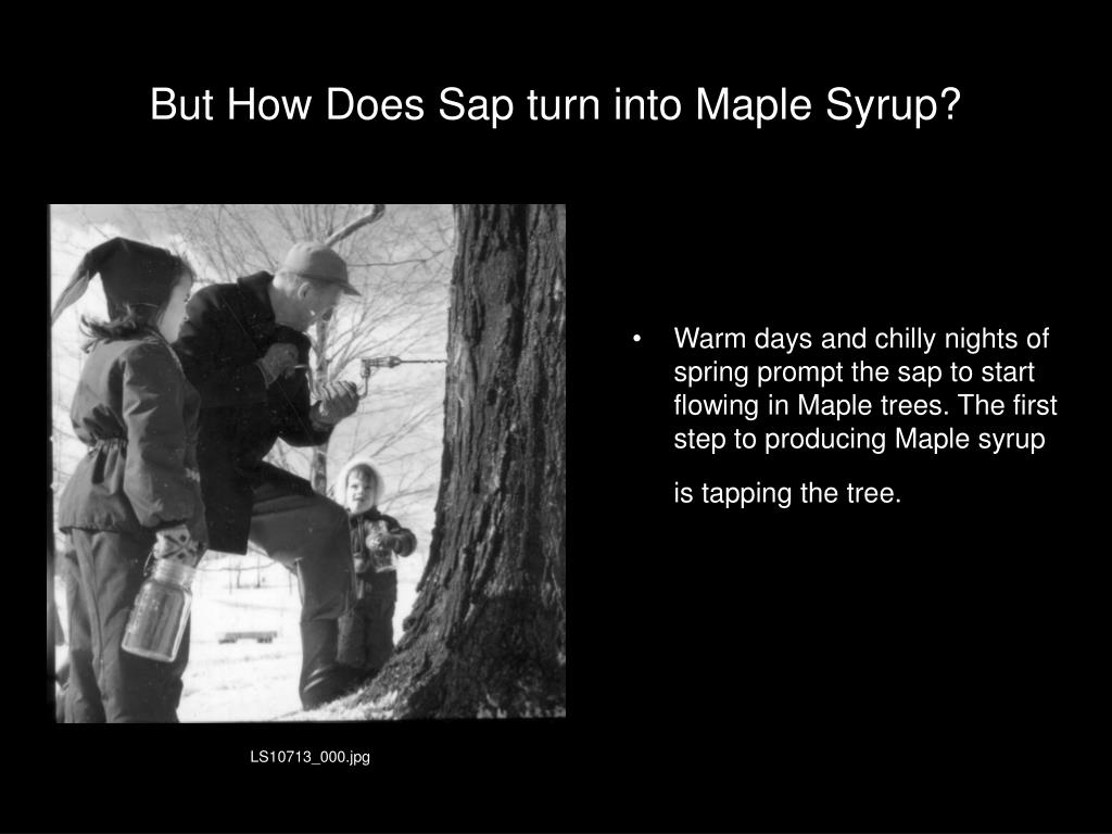 But How Does Sap turn into Maple Syrup?
