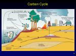 carbon cycle22