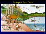 ecological food chain
