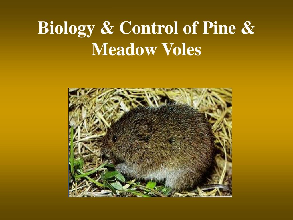 biology control of pine meadow voles l.