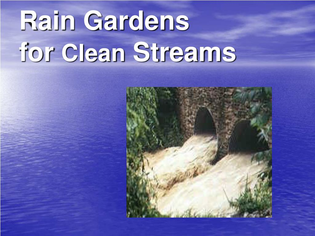 rain gardens for clean streams l.