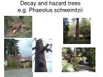 decay and hazard trees e g phaeolus schweinitzii