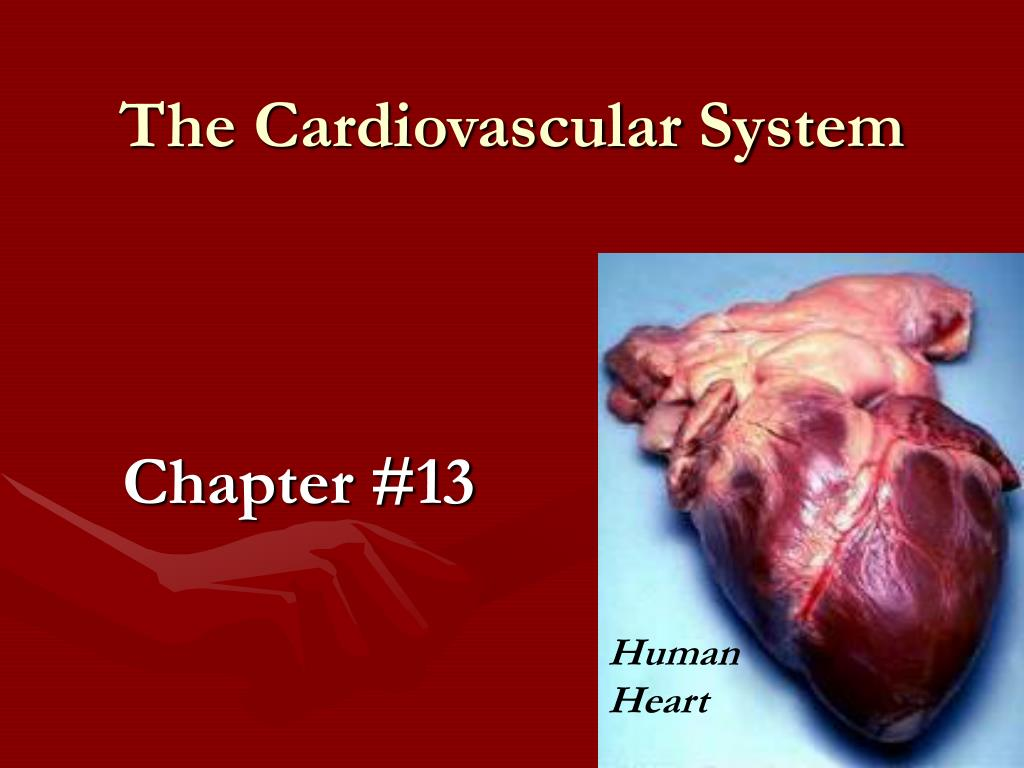 the cardiovascular system l.