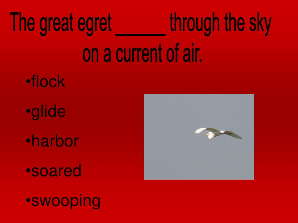 The great egret ______ through the sky