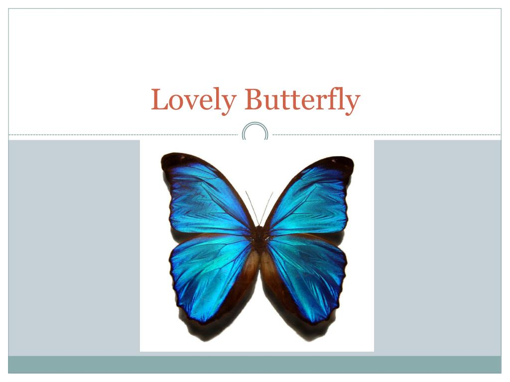 lovely butterfly l.