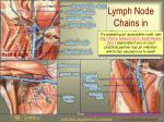 lymph node chains in three body regions