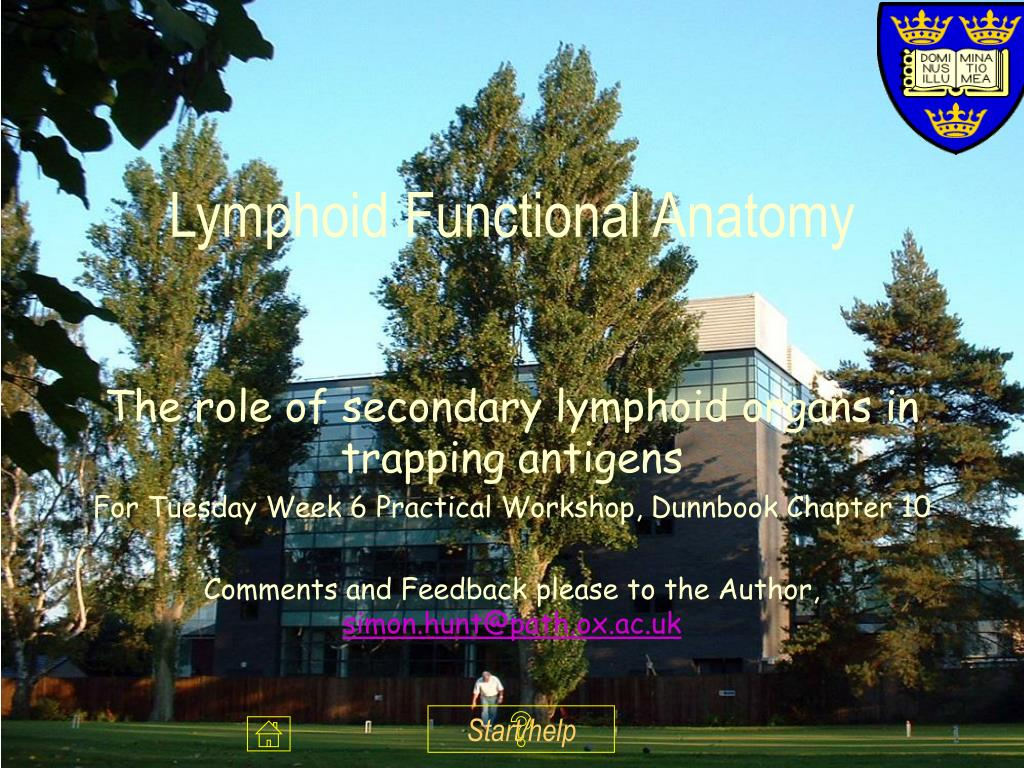 lymphoid functional anatomy l.