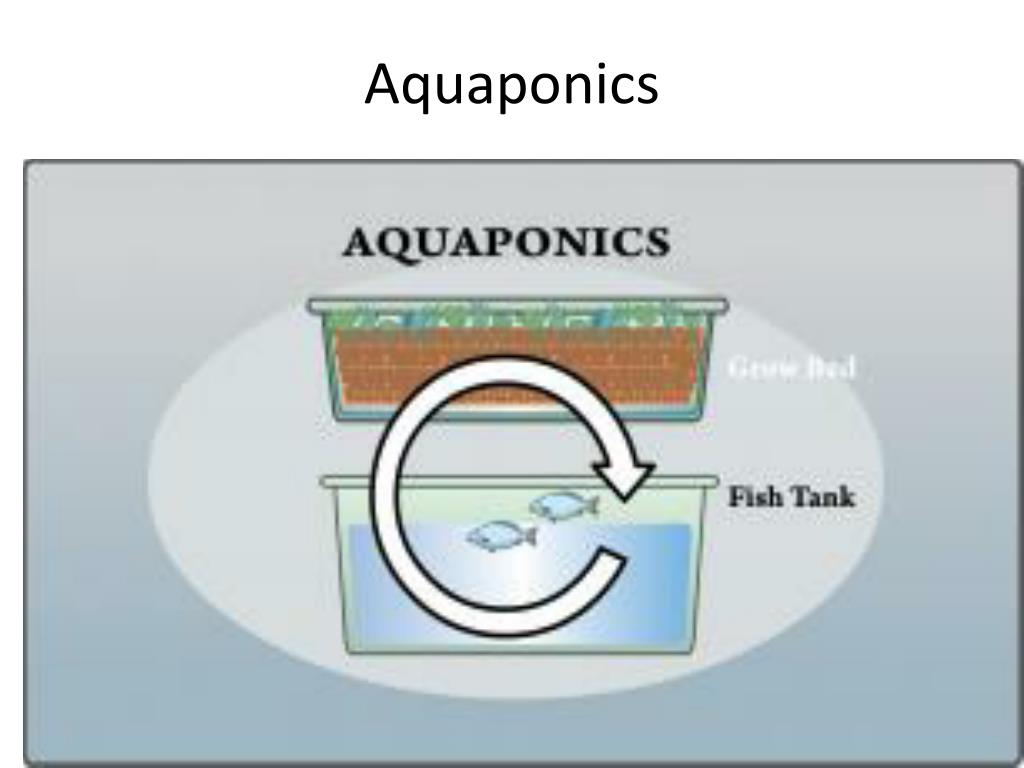 aquaponics l.