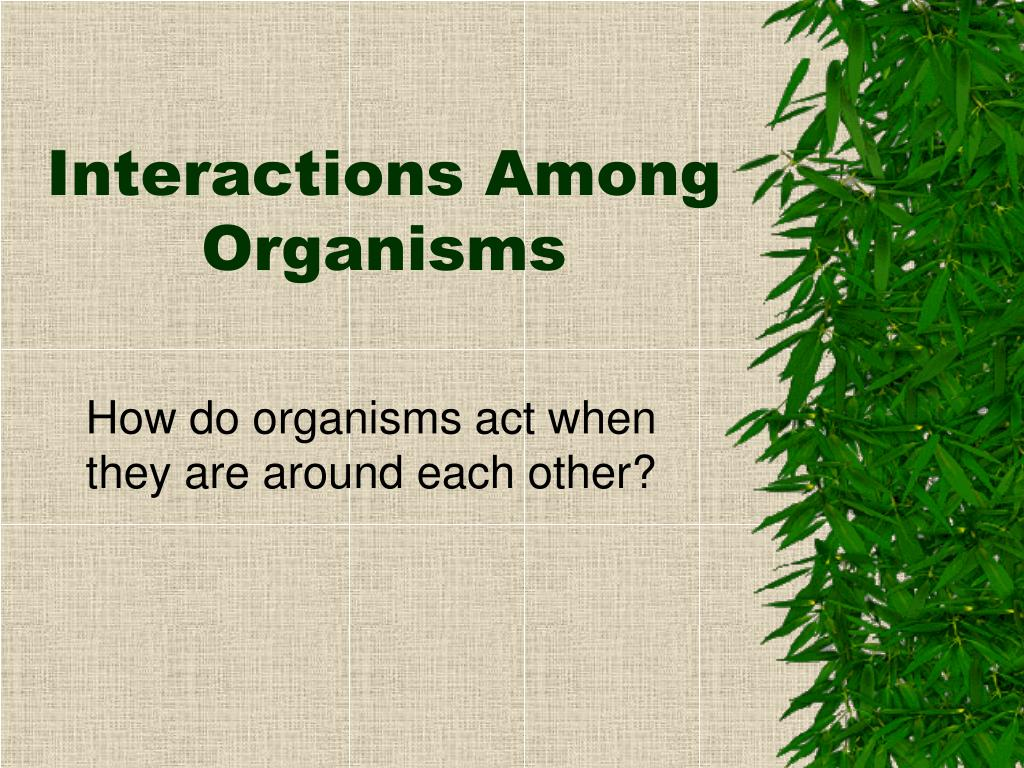 interactions among organisms l.