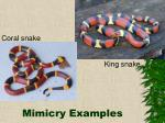 mimicry examples